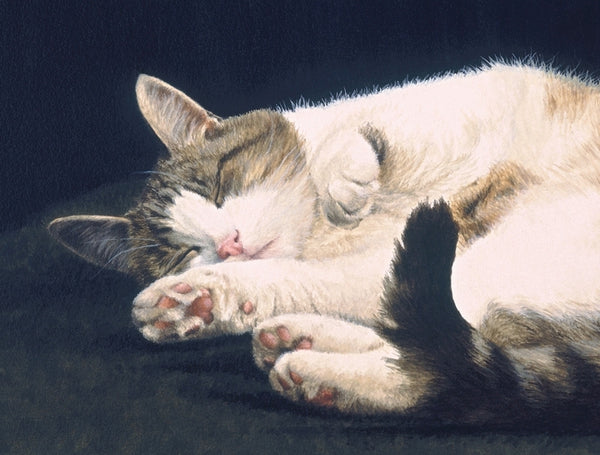 Dreaming tabby cat art print detail, animal artist Jacqueline Gaylard.