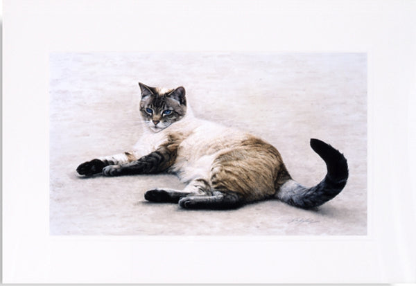 Interlude siamese-persian cat art mounted painting, artist Jacqueline Gaylard.