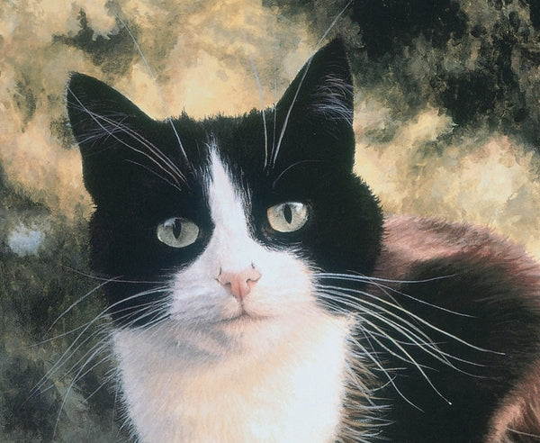 Jess black and white tuxedo cat art print detail, Jacqueline Gaylard.