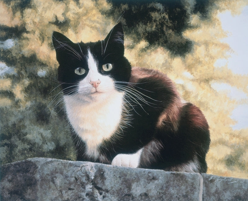 Jess black and white tuxedo cat art print, artist Jacqueline Gaylard.