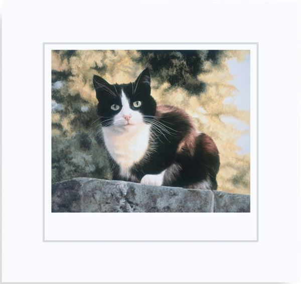 Jess black and white tuxedo cat art print mounted, animal artist Jacqueline Gaylard.