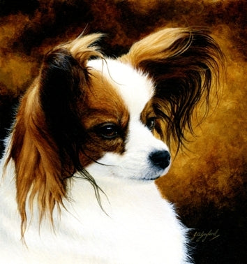 Lady Papillon toy spaniel dog animal art painting, artist Jacqueline Gaylard.