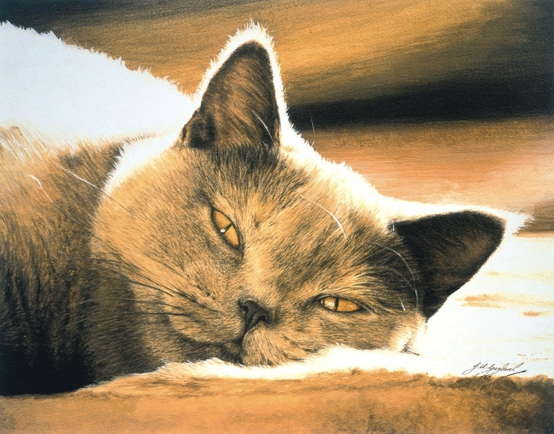 Pure Bliss British Shorthair Blue Cream grey cat art print, animal art by J. Gaylard.