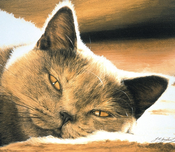 Pure Bliss British Shorthair Blue Cream grey cat art print detail animal art by J. Gaylard.