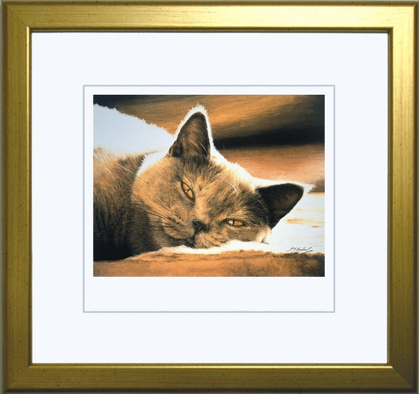 Pure Bliss British Shorthair Blue Cream grey cat art print, framed, artist Jacqueline Gaylard.
