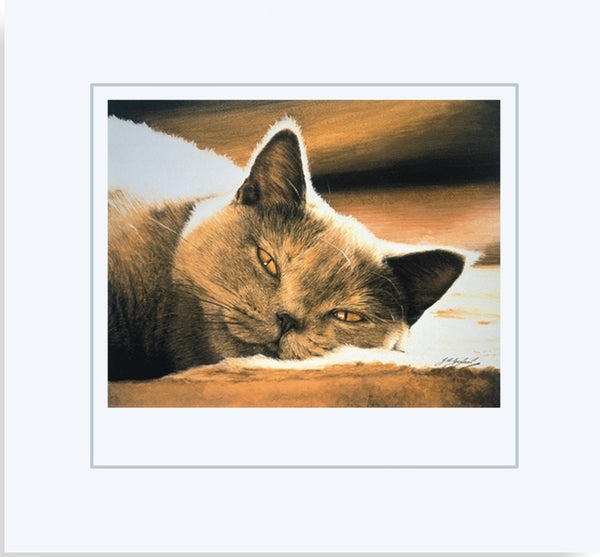 Pure Bliss British Shorthair Blue Cream grey cat art print mounted, by J. Gaylard.