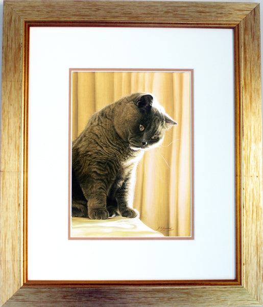 Shine Bright British Shorthair blue cream cat art framed painting, artist Jacqueline Gaylard.