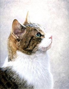 Sweet Angelica tabby cat art painting by Jacqueline A. Gaylard S.O.F.A.