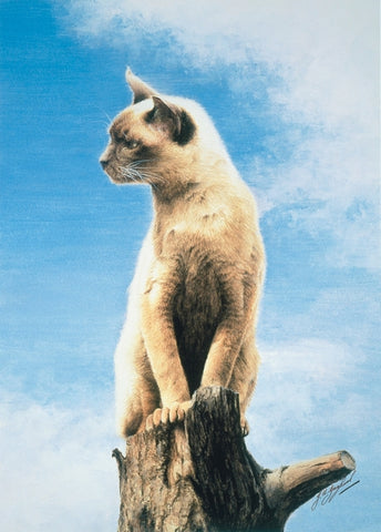 The Look-Out Post Burmese cat art print by Jacqueline Gaylard