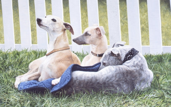 Three Whippets dog animal art painting, artist Jacqueline Gaylard.