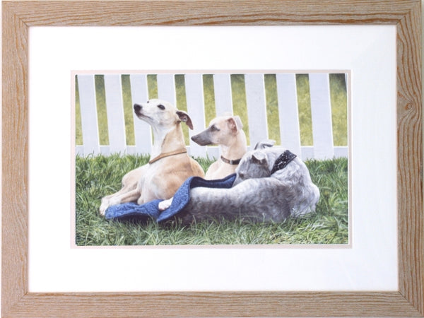 Three Whippets dogs, framed animal art painting by Jacqueline Gaylard.
