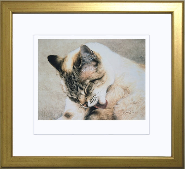 Tosca Siamese Persian cat art print framed, by Jacqueline Gaylard.