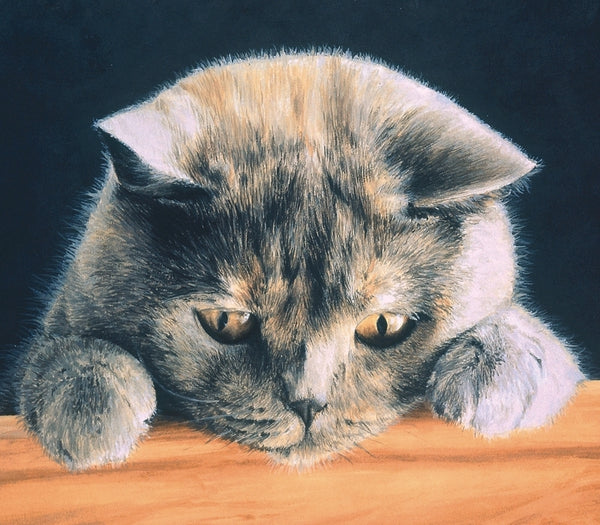 What's New British Shorthair Blue Cream grey cat art print, animal artist J. Gaylard.