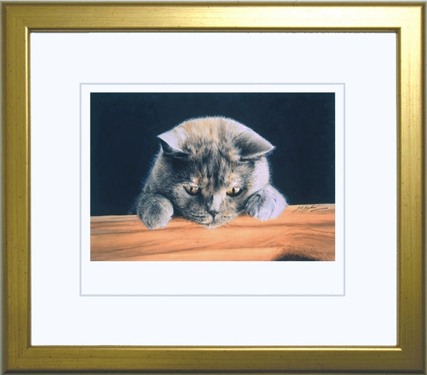 What's New British Shorthair Blue Cream grey cat art print framed Jacqueline Gaylard.