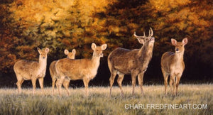 Young Buck Barasingha Deer, original Acrylic painting, by wildlife artist Jacqueline A. Gaylard.