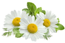Chamomile helps IBS and stomach pain