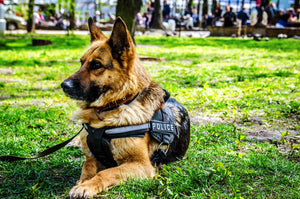 National K9 Veteran's Day March 13 | Military Working Dogs