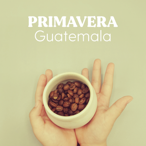 Primavera - Hayuco Coffee Roasters  - torréfacteur toulouse - Specialty Coffee Toulouse