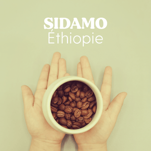 Sidamo - Hayuco Coffee Roasters