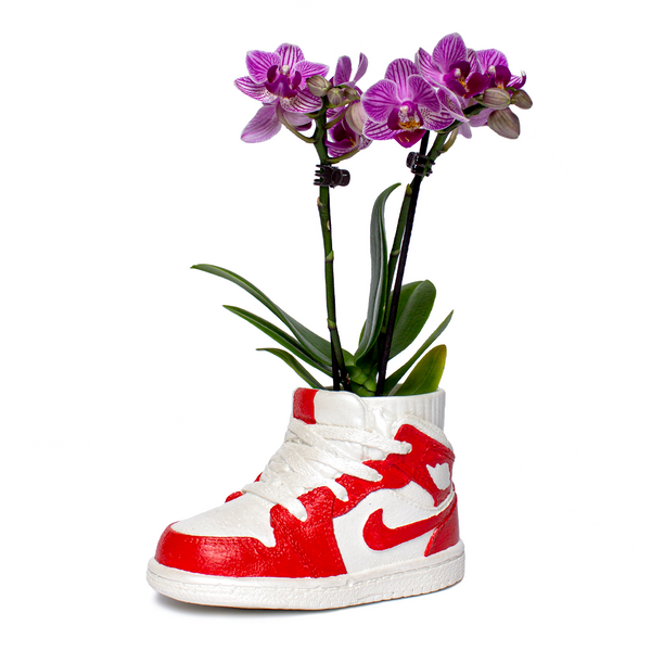 Red & White Jordan 1 SneakerPot