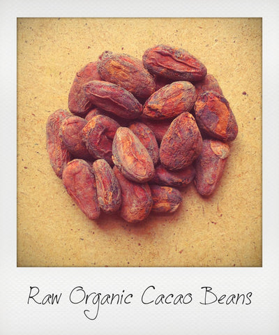 Raw Organic Cacao Beans from Ecuador