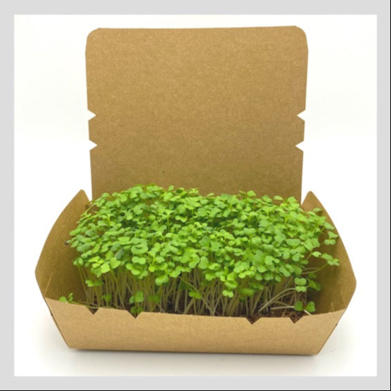 Microgreens Starter Kit. Complete with Organic Non-GMO Microgreens Seeds and a Coco Bed (or Coconut Coir Mats). Start growing Microgreens in Singapore today!  Microgreens Grow Kit.