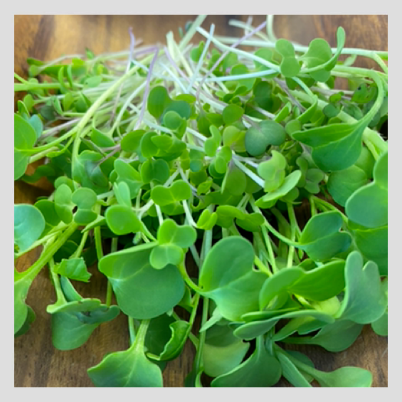 UrbanSproutz Fried Rice Mix Microgreens Seeds. Best Microgreens Seeds in Singapore. Fully Organic & Non-GMO. High germination rate & grow healthy Microgreens now! Will Uncle Roger approve?