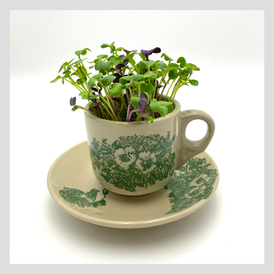 Unique Gift. Healthy & Sustainable Living. Traditional Kopitiam Cup with UrbanSproutz Three Musketeers Microgreens Seeds. Best Microgreens Seeds in Singapore. Fully Organic & Non-GMO. High germination rate & grow healthy Microgreens now!