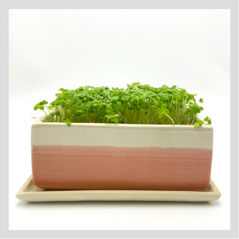 Microgreens Grow Kit. Fully handmade and ceramic. Complete with Organic Non-GMO Microgreens Seeds and Coco Beds (or Coconut Coir Mats). Start growing Microgreens today!