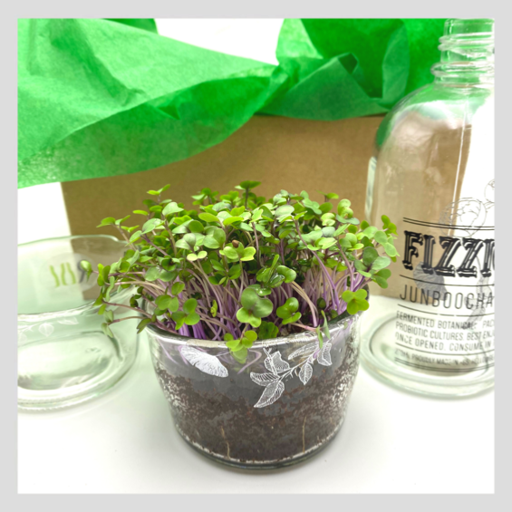UrbanSproutz x Refind Repurposed Glass Bottle Microgreens Grow Kit