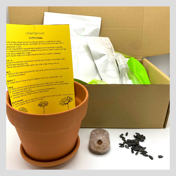 Little Farmers Sunflower Grow Kit
