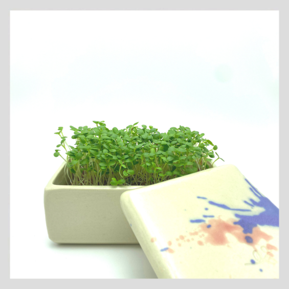 UrbanSproutz Microgreens Grow Kit - Handmade by Ves.Studio in Singapore