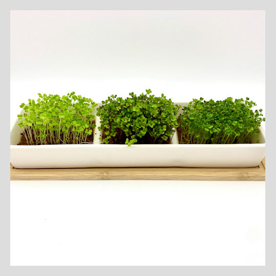 UrbanSproutz Microgreens Grow Kit [Sold Out! Waitlist Open]