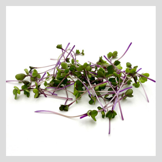 Purple Kohlrabi Microgreens Seeds