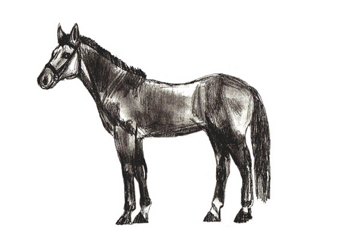 Étape 5 corps cheval