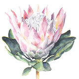 La La Land Greeting Card Protea