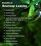 10 x Soursop Leaves (500g)