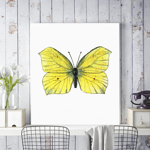 Brimstone Butterfly Illustration on Canvas