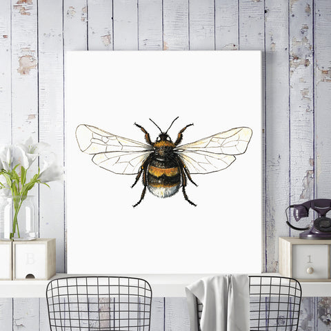 Buff Tailed Bumble Bee Illustration on Canvas
