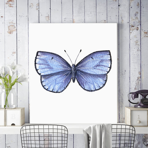 Common Blue Butterfly Illustration on Canvas