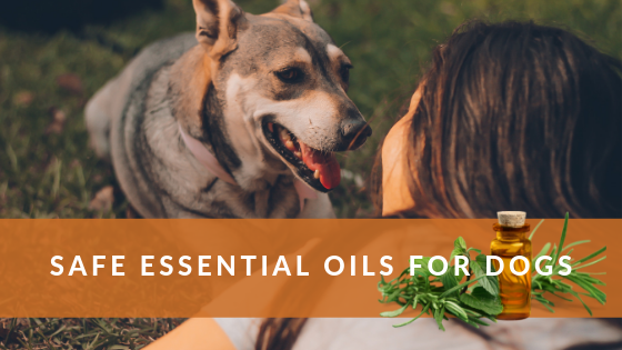 SAFE ESSENTIAL OILS FOR DOGS - TREATMENT FOR DOG SKIN ALLERGIES