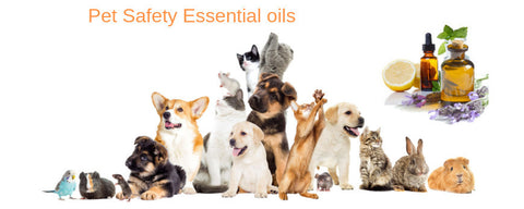 Essential Oils and Pet Safety