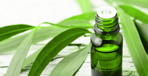 Eucalyptus Essential oil for Throat infections