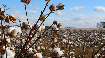 The Cotton Production Process – From Field To Fabric
