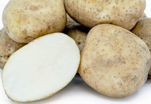 Potato (New Kennebec)
