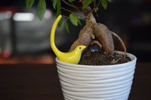 Load image into Gallery viewer, Bird Ring Holder Yellow - geega-home-decor