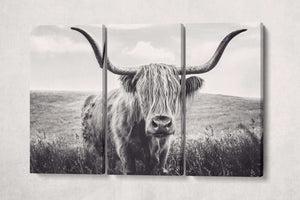Scottish Highland cattle print