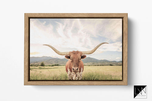 Texas longhorn cow wall art print