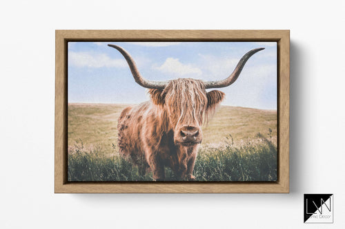 Scottish Highland cattle wall art