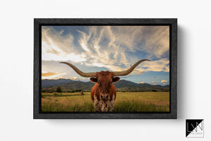 Texas longhorn cattle canvas print